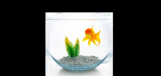 banner_subcat_peixes_aquarios