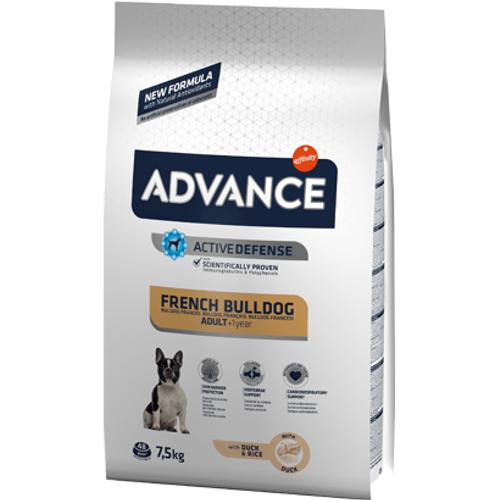 Advance-Dog-Adult-French-Bulldog