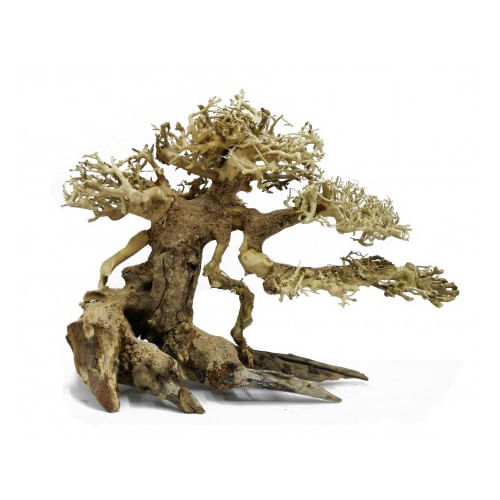 BONSAQUA-Bonsai-inclinada-p--direita-30x35cm