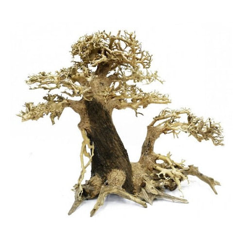 BONSAQUA-Bonsai-multi-tronco-direito-30x35cm