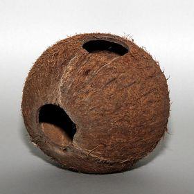 JBL-Cocos-Cava-1-1L