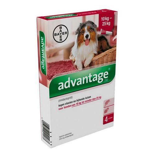 Advantage-250-cao