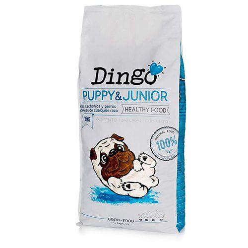 Dingo-Puppy---Junior