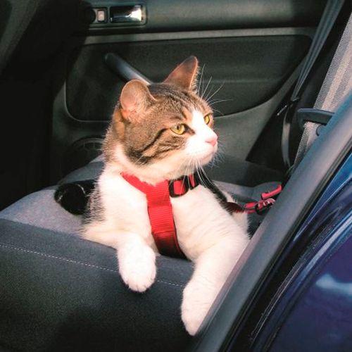 Trixie-Cinto-de-Seguranca-para-Gatos