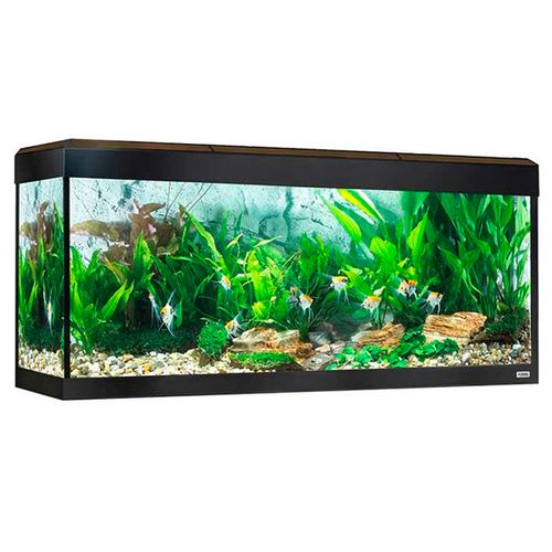 Fluval-Roma-Aquario-LED-Bluetooth-240L-Nogueira