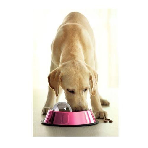 omega-paw-dog-hog-bola-anti-gulping